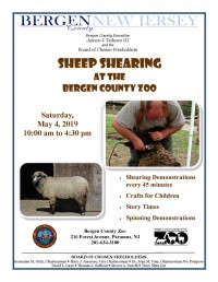 Sheep Shearing at the Bergen County Zoo